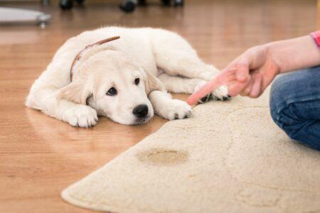 Das hilft, wenn Katz & Hund auf den Teppich machen.